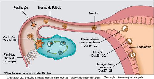 sintomas de ovulo fertilizado